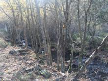 Tratamientos selvícolas en el río Lechada