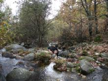 Buscando desmanes en Extremadura
